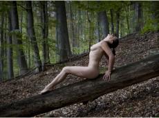 © Bojan Petrović, forest-2