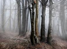 © Borislav Milovanović, Lost  in Mist
