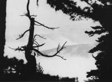© Branislav Strugar, Drvo i magla, 1976