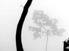 © Branislav Strugar, Drvo u magli, 2013