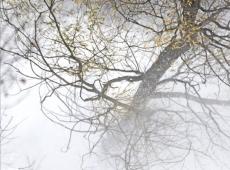 © Branislav Strugar, Jesenja bujica, 2012