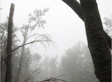 © Branislav Strugar, Slomljeno stablo, 2012