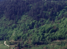 50 Mesto sobranja, manastir Studenica, 2000