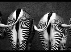 Tail Dance