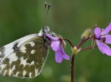 Kerekes István, Flower with butterfly
