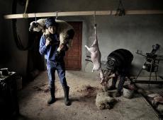 Kerekes István, Lamb slaughter