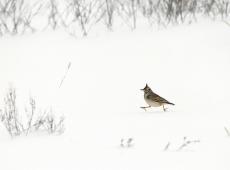 Kerekes István, Running in snow