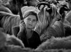 Kerekes István, Shepherd girl