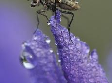 Kerekes István, The fly