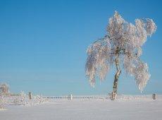 Jacky Panhuyizen ©, White Tree