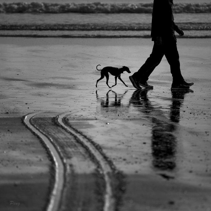 © Jiongxin Peng, Follow