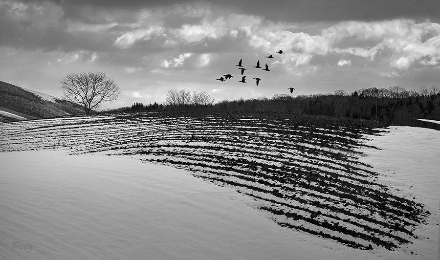 © Jiongxin Peng, Flying-Ducks-in-the-Snow