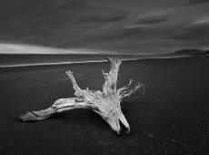 © Jiongxin Peng, Dead-Wood