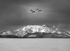 © Jiongxin Peng, Snow-Hokkaido