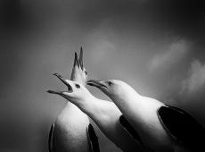 © Normante Ribokaite, Loud