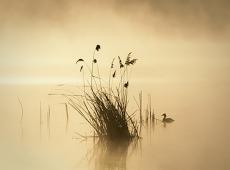 © Normante Ribokaite, EARLY MORNING