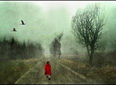 © Ole Suszkiewicz, Foggy Walk