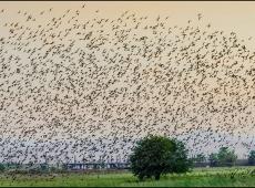 Birds Cor